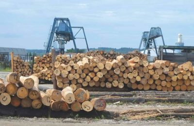 Holzbearbeitung nachhaltige Waldwirtschaft
